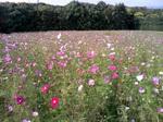 花の丘.JPG