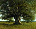 樫の木.jpg